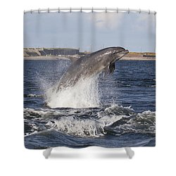 Bottlenose Dolphin - Scotland  #26 Shower Curtain