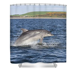 Bottlenose Dolphin - Scotland  #32 Shower Curtain