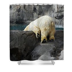 Bottoms Up Shower Curtain by Carolyn Dalessandro