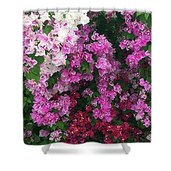Bougainville Flowers In Hawaii Shower Curtain