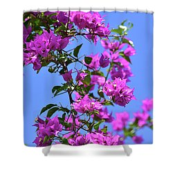 Bougainvillea And Sky Shower Curtain