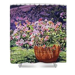 Bougainvillea Flower Pots Beverly Hills Shower Curtain