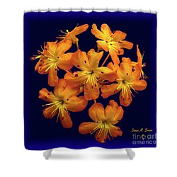 Shower Curtain featuring the digital art Bouquet In A Box by Donna Brown