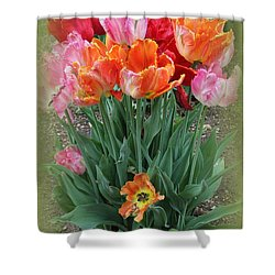 Bouquet Of Colorful Tulips Shower Curtain