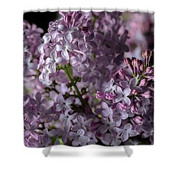 Bouquet Of Lilacs II Shower Curtain