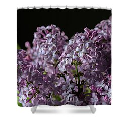 Bouquet Of Lilacs Shower Curtain