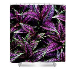 Bouquet Of Persian Shield Shower Curtain