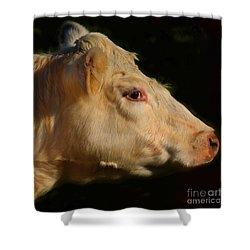Bovine Portrait Shower Curtain