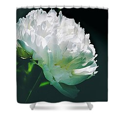 Bowl Of Cream Peony Shower Curtain by Julie Palencia