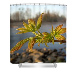 Shower Curtain featuring the photograph Box Elder Leaves In Dawn Light by Kent Lorentzen