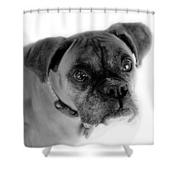 Boxer Dog Shower Curtain by Marilyn Hunt