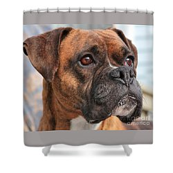 Boxer Portrait Shower Curtain