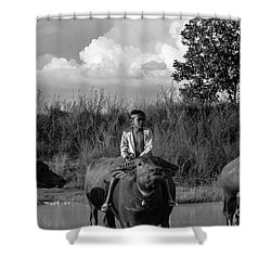 Boy And Cows Shower Curtain by Arik S Mintorogo