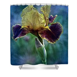 Vintage Boy Wonder Iris Shower Curtain by Richard Cummings