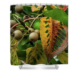 Bradford Pear Fruit And Leaves Shower Curtain