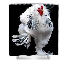 Brahma Breeders Rock T-shirt Print Shower Curtain