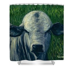 Brahma Bull  Shower Curtain
