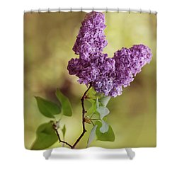 Branch Of Fresh Violet Lilac Shower Curtain