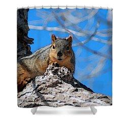 Branch Squirrel Shower Curtain