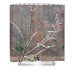 Branches In Ice Shower Curtain