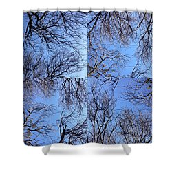 Shower Curtain featuring the photograph Branches by Nora Boghossian