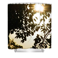 Shower Curtain featuring the photograph Branches by Artists With Autism Inc