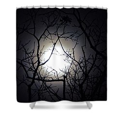 Branches To The Moon Shower Curtain