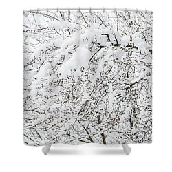 Branches Weighted With Snow Shower Curtain