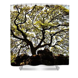 Branching Out Shower Curtain by Craig Wood