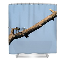 Branching Out Shower Curtain by Karol Livote
