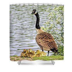 Branta Canadensis  #canadagoose Shower Curtain