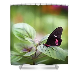 Shower Curtain featuring the photograph Brave Butterfly  by Cindy Lark Hartman