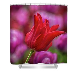 Shower Curtain featuring the photograph Brazenly Delicate by Bill Pevlor