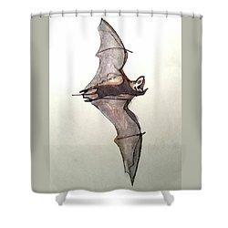 Brazilian Free-tailed Bat Shower Curtain