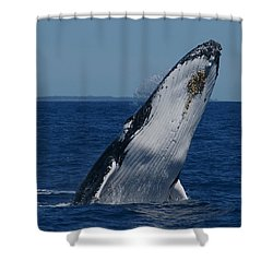 Shower Curtain featuring the photograph Breaching Humpback Whale by Gary Crockett