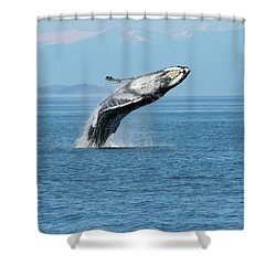 Breaching Humpback Whales Happy-3 Shower Curtain
