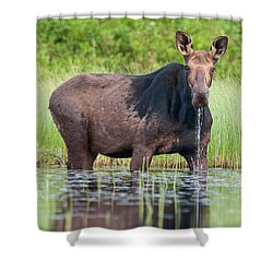Breakfast At Mooshead Shower Curtain by Brent L Ander