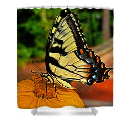 Shower Curtain featuring the photograph Breakfast At The Gardens - Swallowtail Butterfly 005 by George Bostian