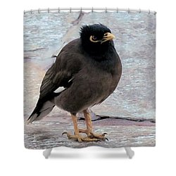 Breakfast Greeter, Maui Shower Curtain by I'ina Van Lawick