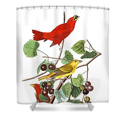 Shower Curtain featuring the photograph Breakfast Time by Munir Alawi