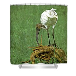 Breakfast With The Ibis Shower Curtain