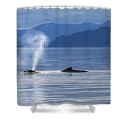 Breath Of A Whale Shower Curtain by Michele Cornelius