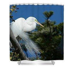 Shower Curtain featuring the photograph Breeding Beauty by Fraida Gutovich