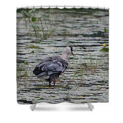 Breezy Blue- Great Blue Heron Shower Curtain by David Porteus