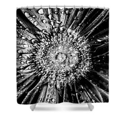 Brewer Bw Shower Curtain by Matti Ollikainen