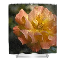 Shower Curtain featuring the photograph Bridal Pink Yellow Hybrid Tea Rose Genus Rosa by David Zanzinger