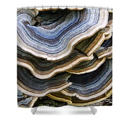 Bridgeport Mushrooms Shower Curtain