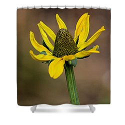 Bright And Shining Shower Curtain by Deborah  Crew-Johnson
