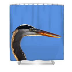 Shower Curtain featuring the photograph Bright Beak Blue .png by Al Powell Photography USA
