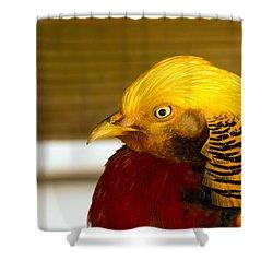 Bright Bird Shower Curtain